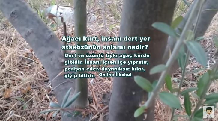 Ağacı kurt, insanı dert yer