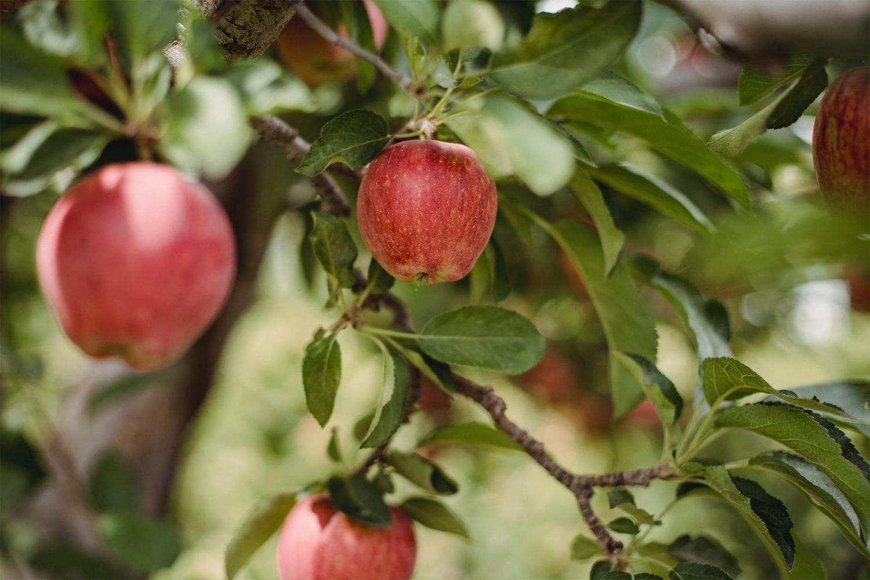 Al elmaya taş atan çok olur.