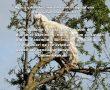 Ağaca çıkan keçinin dala bakan oğlağı olur