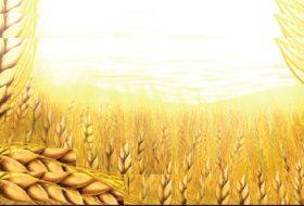 Ekmeğin üretim aşamaları nelerdir?