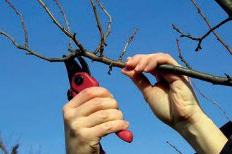 Meyve ağacının bakımı için neler yapılır?