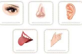 3. sınıf Fen bilimleri duyu organları ile ilgili online test 1