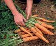 Sebze ve meyve yetiştiriciliği nerelerde yapılır?