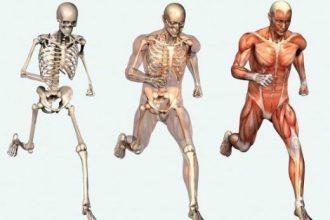 Vücudumuzda Bulunan Destek ve Hareket Sistemi