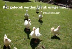Kaz gelecek yerden tavuk esirgenmez