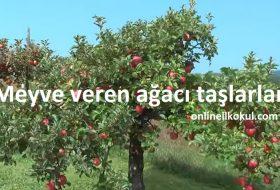 Meyve veren ağacı taşlarlar