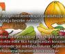 Sağlıklı ve dengeli beslenmek için vücudumuzun ihtiyaç duyduğu besinler nelerdir?