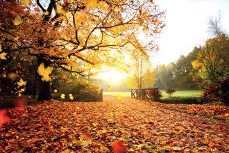 Sonbahar mevsiminde olan doğa olayları nelerdir?