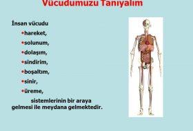 Vücutta bulunan sistemler
