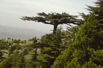 Doğa ve Tabiat ile İlgili Bilmeceler