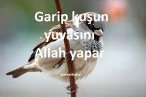Garip kuşun yuvasını Allah yapar