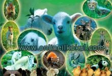 Hayvanlardan elde ettiğimiz faydalar nelerdir?