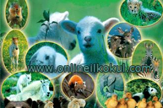 Hayvanlar ile İlgili Bilmeceler