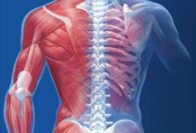 Teknolojik gelişmeler sonucunda iskeletimizi ve kaslarımızı etkileyen hastalıkların tedavisinde ne tür değişimler olmuştur?