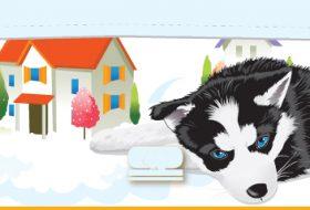 Hav Hav Hav! Benim Cici Köpeğim Hav Hav Hav! Köyümü Bekle