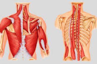 İskelet ve kaslarımızın daha güçlü ve sağlıklı olması için nelere dikkat etmeliyiz?