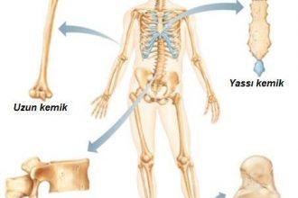 Kemikler, Kemik Çeşitleri
