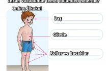 İnsan vücudunun temel bölümleri nelerdir?