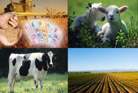 Tarım ve hayvancılığın hayatımızdaki yeri