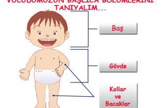 Vücudumuz kaç bölümden oluşur?